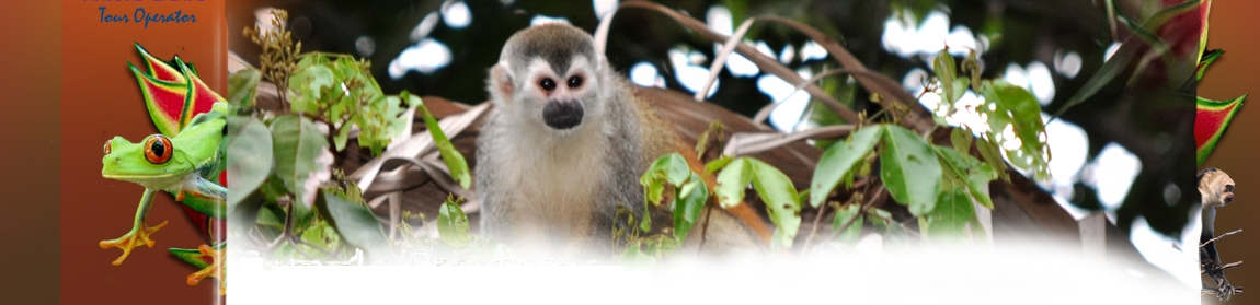 Encounter with a squirrel monkey in Costa Rica