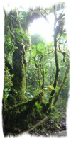Cloud Forest seen during the Tour and Drive Costa Rica package