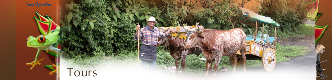 Oxcart transportation in Costa Rica, come to Costa Rica and experience it's friendly culture
